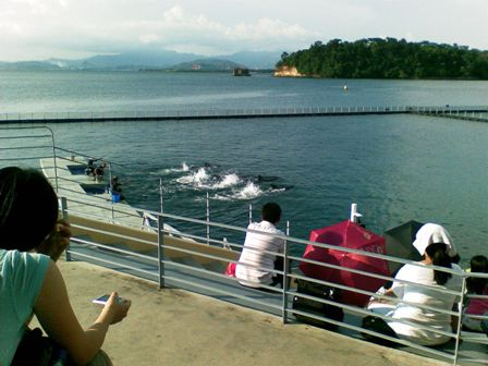 whale show in subic