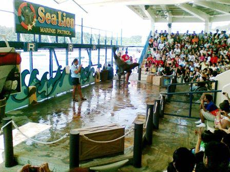sea lion show in ocean adventure