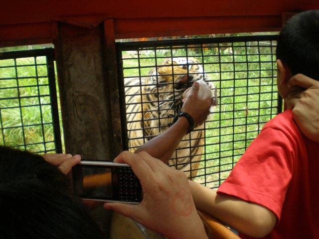 Tiger Safari in subic safari