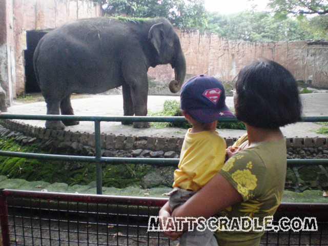 Manila-Zoo-Elephant