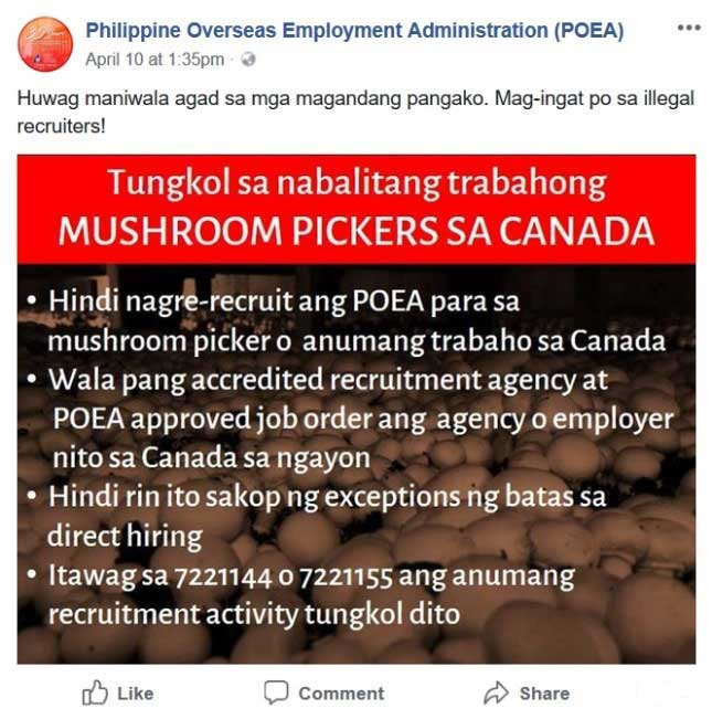 canada mushroom picker jobs for filipino