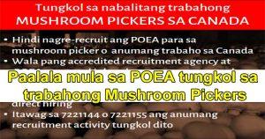 canada mushroom picker