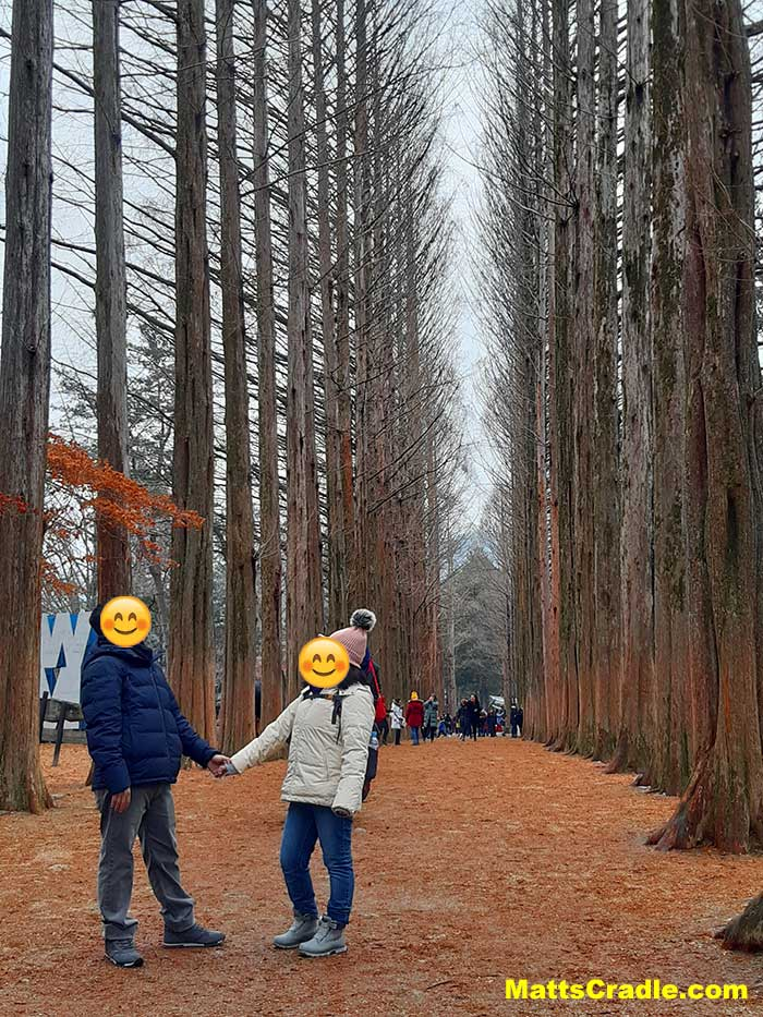nami island trees picture